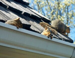 Animals will get into your roof and cause damage